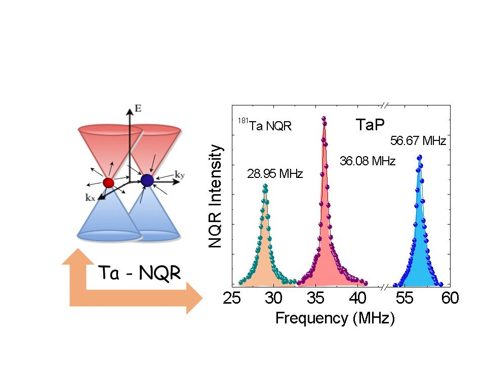 Exploring bulk Dirac- and Weyl- fermion magnetism by local probes: NMR and µSR